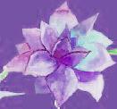 pink-single-flower